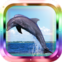 Dolphin Diver