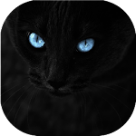 Black cats Live Wallpaper 4.3