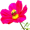 Flower Widget logo