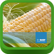 BASF México-Cultivo del Maíz 1.0.1 Icon