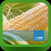 BASF México-Cultivo del Maíz