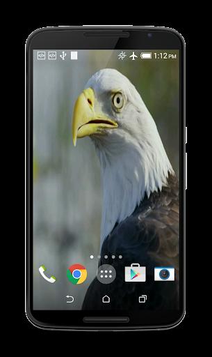 USA Eagle Live Wallpaper  screenshots 3