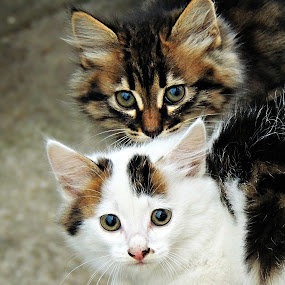 Double Trouble by Tamsin Carlisle - Animals - Cats Kittens ( two, nervous, pair, heads, shy, apprehensive, kittens, feral,  )