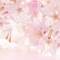 Cherry Blossom Atom theme icon
