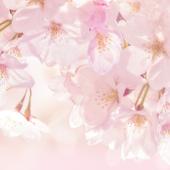 Cherry Blossom Atom theme