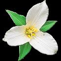Washington Wildflowers icon