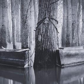 In Love by Paulo Veiga - Black & White Landscapes ( raw, haze, b&w, pateira, bw, reflections, blur, in love, vapor, padlocks, portugal, branches, black, water, fisher boat, lagoon, 2014, boats, paulo veiga, white, pixoto, bateira, lake, frame, fog, herb, locks, trees, lightroom, mist,  )