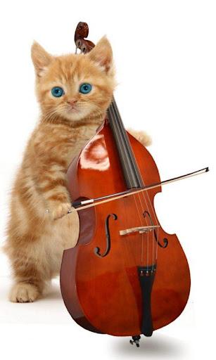 有趣的猫。跳舞和演奏