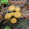 Little orange mushrooms
