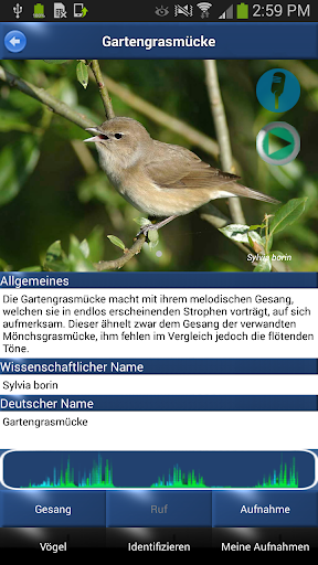 Screenshot for Vogelstimmen Id - Ruf + Gesang in Hong Kong Play Store