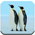 Penguin - HD Wallpapers icon