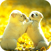 Cute Pet Farm