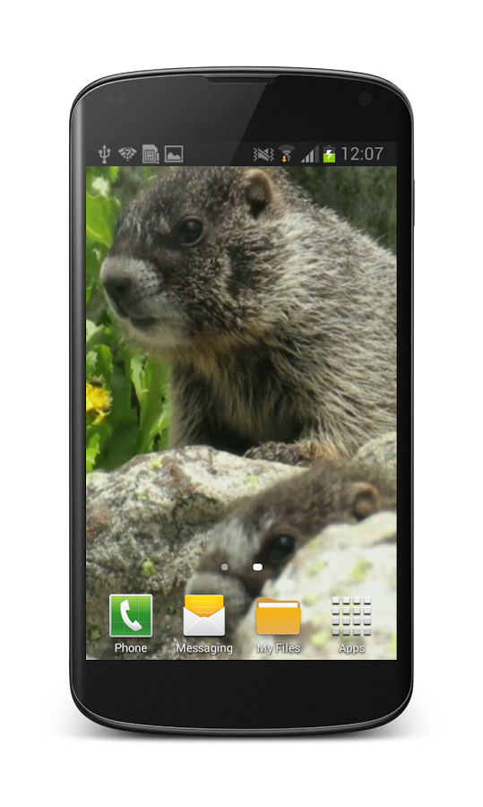 Cute Marmot Free 3D Wallpaper - screenshot