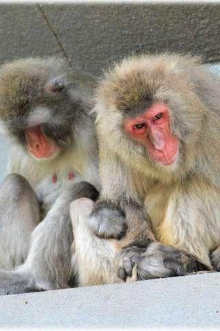 일본 원숭이 퍼즐