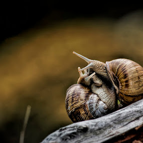 hugs by Ionel Covariuc - Animals Other ( hugs snail  nature animal picture )