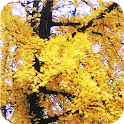 European Autumn Wallpaper icon
