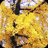 European Autumn Wallpaper