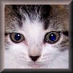 Purr Kitty Plus