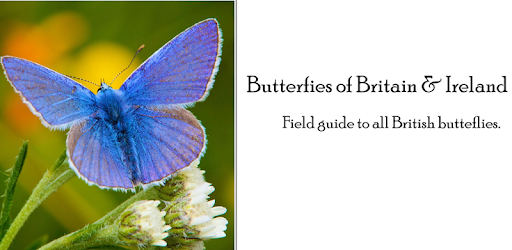 Covers 85 butterfly species that are found in Britain, Ireland & mainland Europe