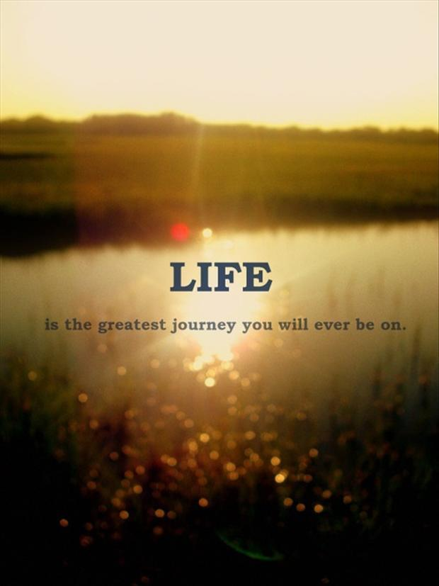 Quote Of Life Unique Life Quotes  Android Apps On Google Play