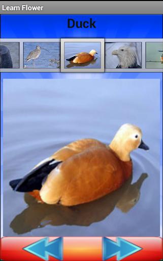 免費下載解謎APP|Birds Quiz app開箱文|APP開箱王