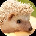 Hedgehogs Live Wallpaper icon