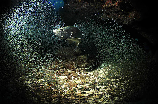 Marine life in the reefs in the Cayman Islands.