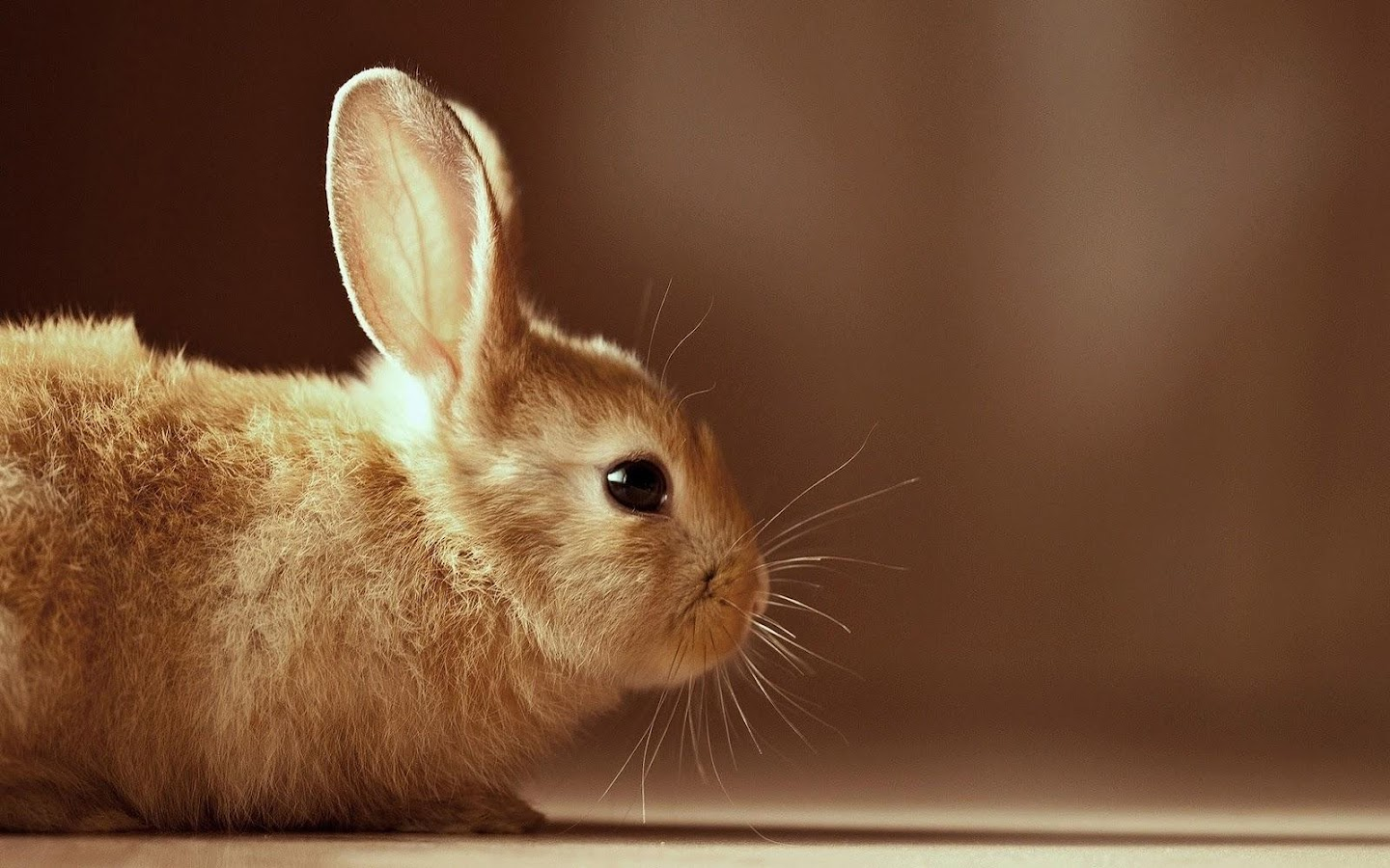 rabbit wallpapers android apps on google play