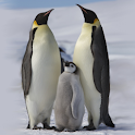 Penguins of Antarctica FREE