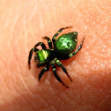 Metallic Green Spider