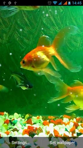 Aquarium Live Wallpaper Android App Screenshot
