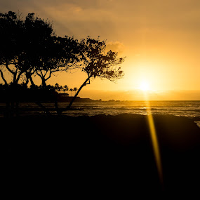 Sunset at Mauna Lani by Nicole Mitchell - Landscapes Sunsets & Sunrises ( orange, mauna lani, sunset, trees, ocean, hawaii )
