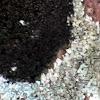 Marine Black Lichen