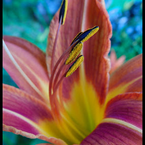 Day Lilly  by Smg Grink - Nature Up Close Other Natural Objects