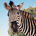 Kruger Park Wildlife icon