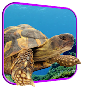 Turtle 3D Live Wallpaper