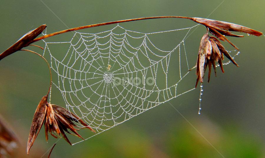 by Shrikrishna Bhat - Nature Up Close Webs