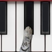 कैट पियानो