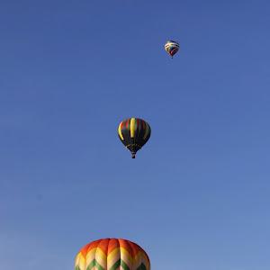 76 Pretty Balloons, All In A Row CRW_2057.jpg