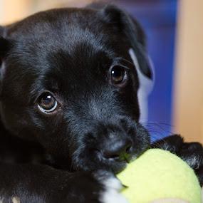 Mala by Dejan Stanic - Animals - Dogs Puppies (  )