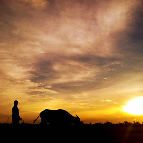 Man and Work by Krizzel Almazora - Instagram & Mobile Android ( carabao, sunrise, people, philippines )