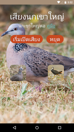 เสียงนกเขาใหญ่