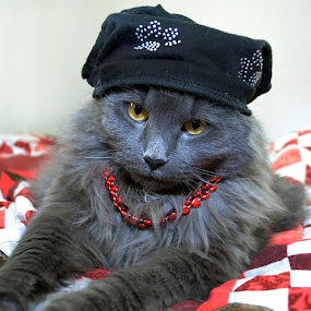 I Dress For Mommy by Corinne Noon - Animals - Cats Portraits ( smokey, cat, gentle, furry, gray, boy, portrait )