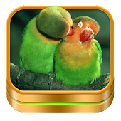 Bird Ringtones and Wallpapers