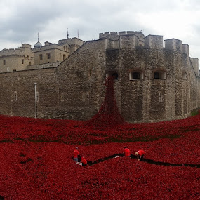 Sea of Poppys at the Tower of London. Amazing!!! by Paul Jenking - Novices Only Landscapes
