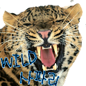 babysound.Wild Safari logo
