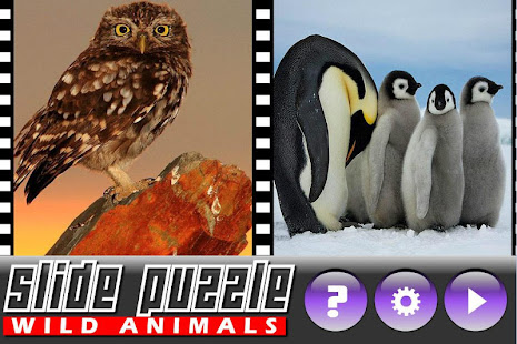 Game Slide Puzzle Wild Animals APK for Windows Phone