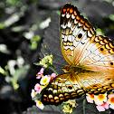 Mariposa Pavorreal