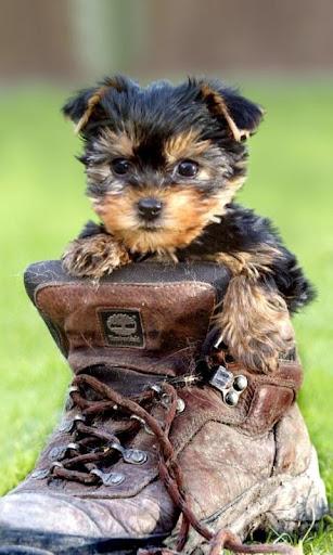 可愛的小狗,小狗