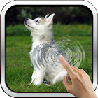 Cute Husky Puppy Live Wallpaper icon